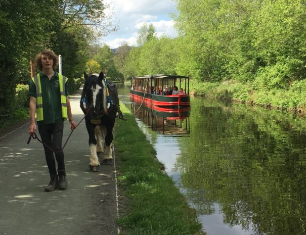 Horse Drawn Canal Cruise on the Llangollen Canal